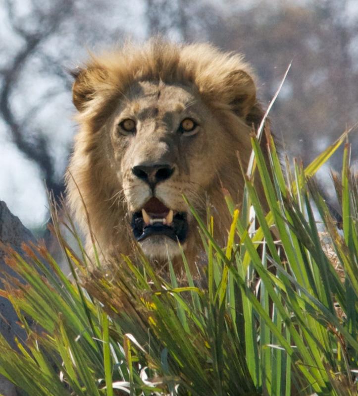 Part 2 The Lion Of Judah A Lion Has Roared